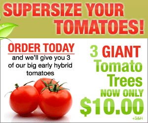 Supersize Your Tomatoes! 3 Giant Tomato Trees. Order Today and we'll give you 3 of our big early hybrid tomatoes as our gift to you. Just Pay Shipping & Handling!  Click here for details...