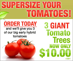 Supersize Your Tomatoes! Click here for details...
